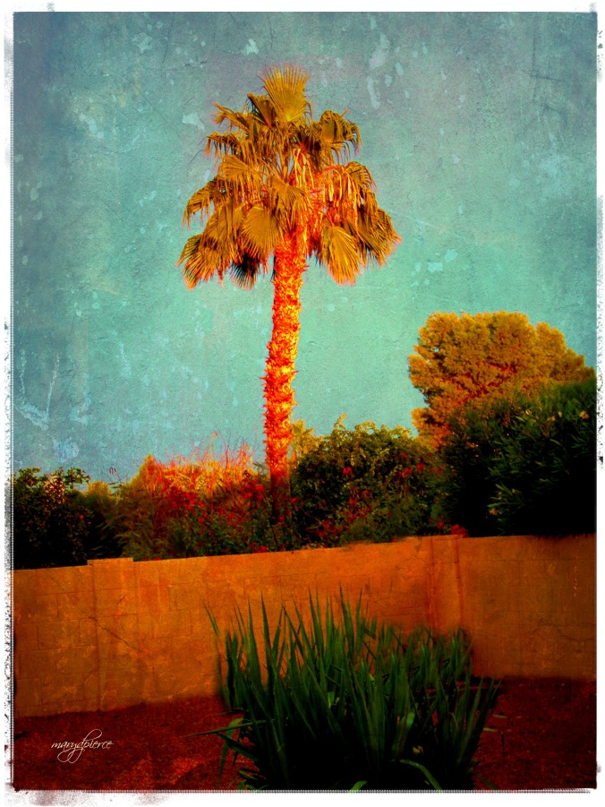 AZ palm tree pm med