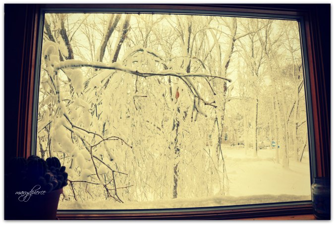 The snow-shrouded branch pointing at my kitchen window was actually touching the glass.  Made me think of a blink angel getting closer and closer. . . .