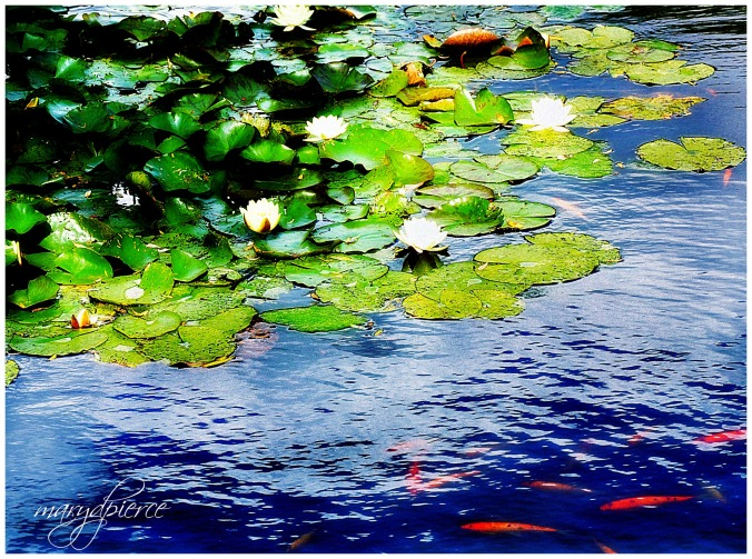 Kipling's pond pm