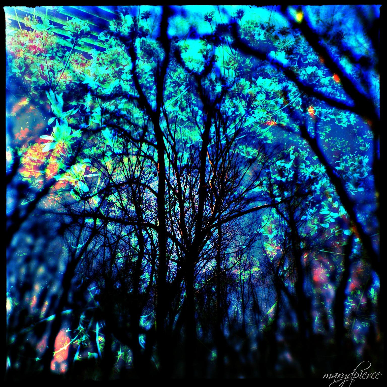 Creepy Woods 2