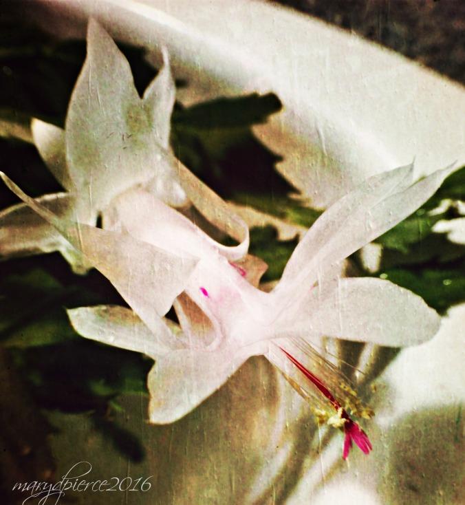 vernal blossom